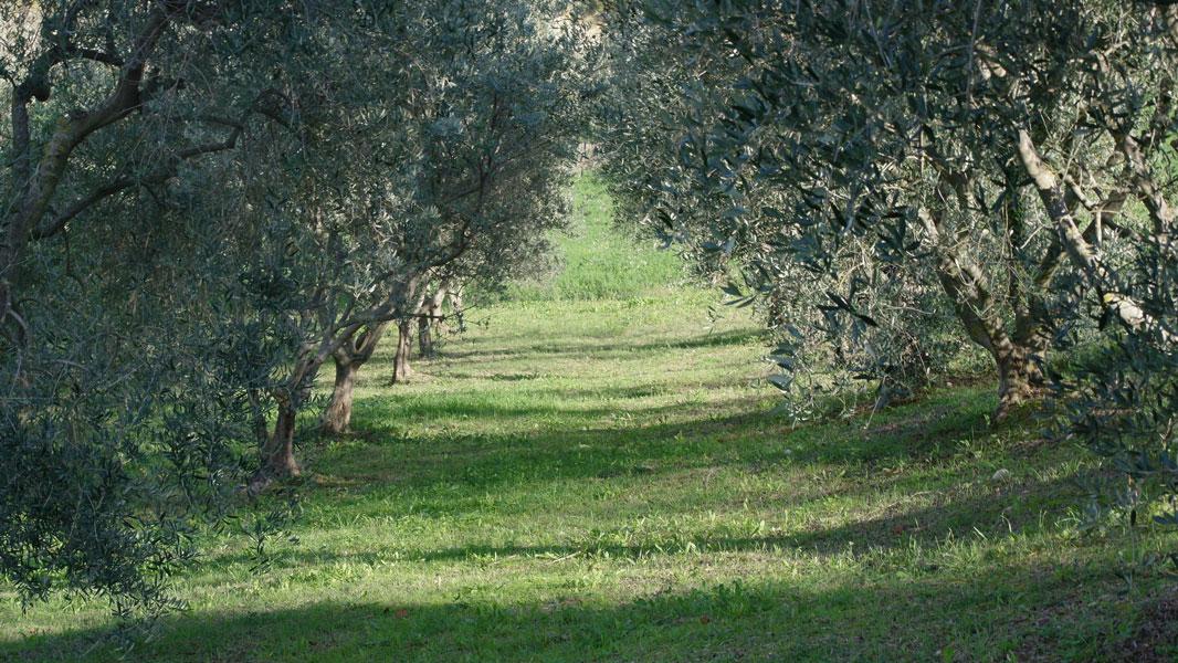casa-lavolpaia-omgeving8